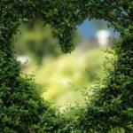 Piękny ,a także czysty zieleniec to zasługa wielu godzin spędzonych  w jego zaciszu w trakcie jego pielegnacji.